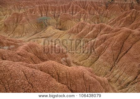 Single Green Tree In The Middle Of Sand Canyon In Tatacoa Desert