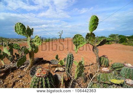 Different Cactus Types Closeup In Bright Orange Terrain Of Tatacoa Desert