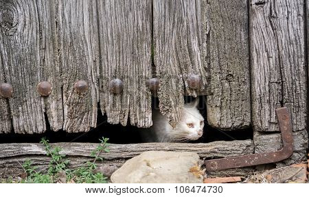 Front view of wounded cat through old wooden door hole poster