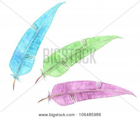three colour feathers, watercolor drawing