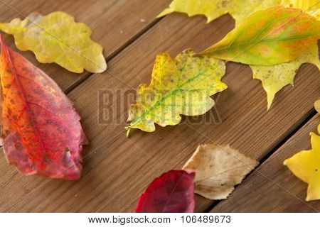 nature, season, autumn and botany concept - close up of many different fallen autumn leaves on wooden board poster