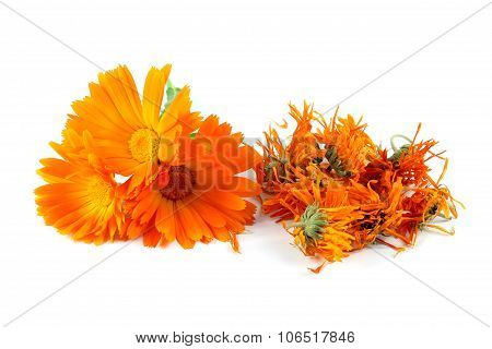 Calendula Officinalis Flower, Marigold, Dried