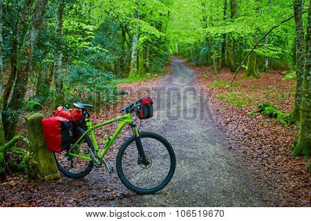 Roncesvalles beech begin of Way of Sain James biking in Navarra Pyrenees