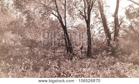 Antique Tone Sepia. Trees and Undergrowth.