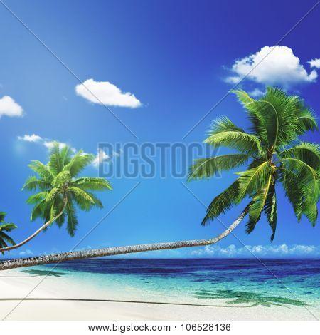 Scenic View Sea Shore Sand Coconut Palm Trees Concept