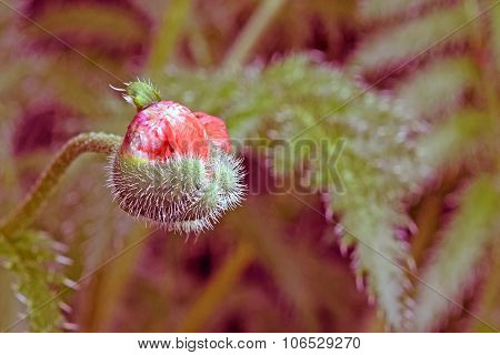 nature red closeup summer nobody