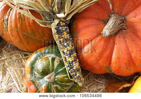 Corn Maize Pumpkin Harvest  Green Grocer Stall