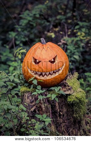 Halloween Pumpkin With Fiendish Smile On Scary Trunk In Forest