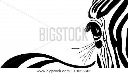 Zebra Banner