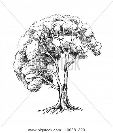 vector tree sketch engraving, ink silhouette of a tree hand drawn