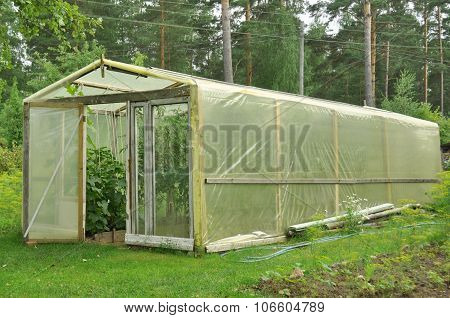 Greenhouse cellophane for growing sprouts - tomatoes