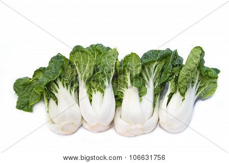 Baby Pak Choi On White Wooden Background