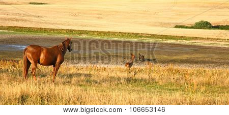 Horses in the Nature in south Sweden in the province of Skane