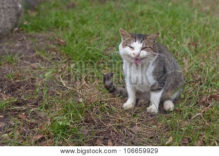 Angry Fat Cat