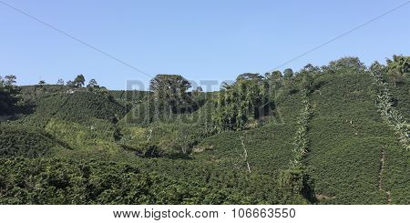 The Coffee Belt also called Coffee Triangle is a topographic region of Colombia within its extension by the departments of Caldas Risaralda Quindio Valle del Cauca Antioquia and Tolima. poster