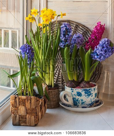 Spring Flowers In Pots On The Window