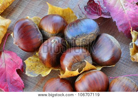 Sweet Chestnuts (castanea Sativa) Closeup