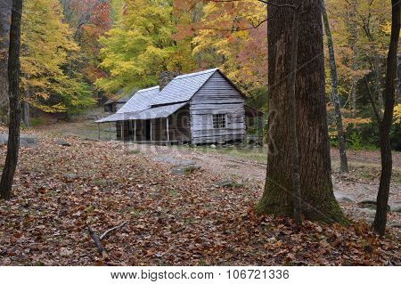 This Ole' Cabin