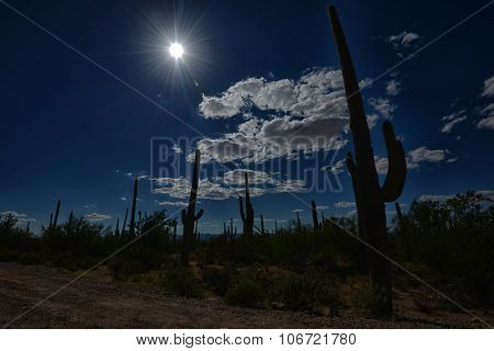 silhouette of saguaro cacti against blue sky with sunburst in western landscape