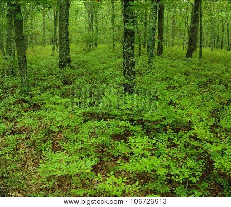 Green undergrowth in a forest