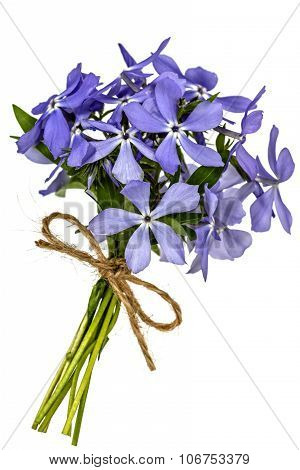 Bouquet From Flowers Phlox, Isolated On White Background