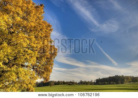 Autumn Colors Of The Nature