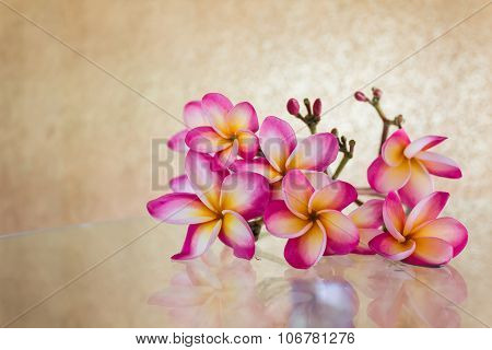 Sweet beautiful fragrant flower frangipani (plumeria)