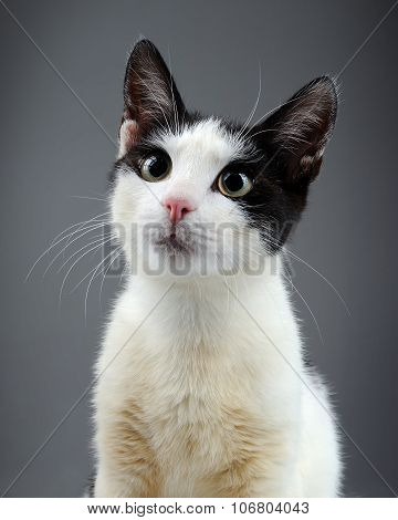 Cute Kitten Close-up Looking At Camera
