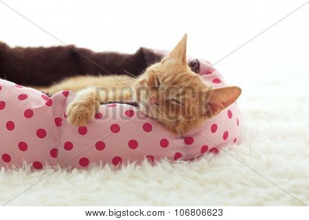 A ginger kitten sleeps in his soft cozy bed on a white carpet, soft focus poster