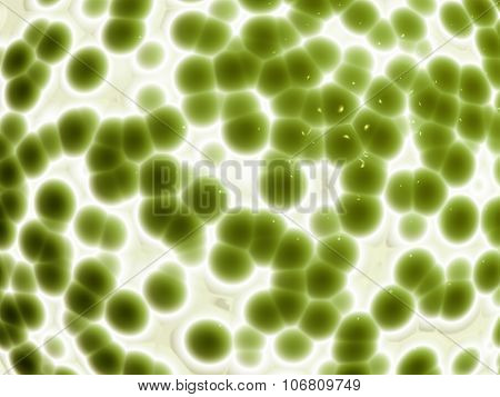 Background with 3d organic cell texture