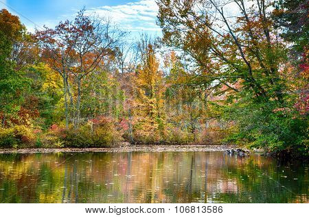 Autumn On Th Pond