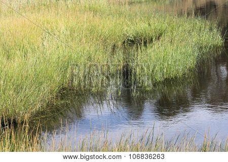 Tidal Waters