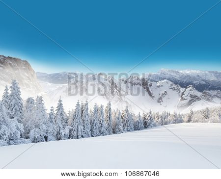 Winter snowy forest with alpen panorama and blue sky