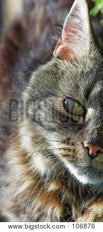 Single Cat Eye
