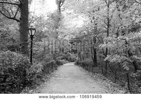 Path In Black And White
