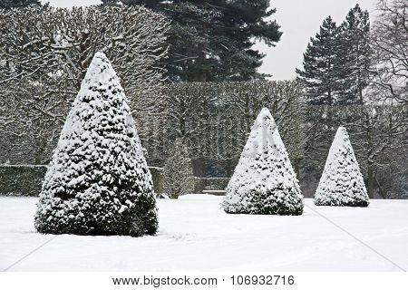 Winter Garden, yew trees under snow (near Paris France)
