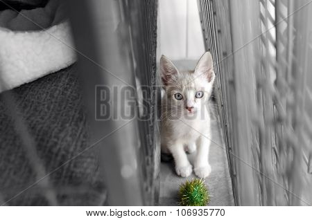 Shelter animal is a cute white kitten in an animal shelter looking up wondering if somone will adopt him today. poster