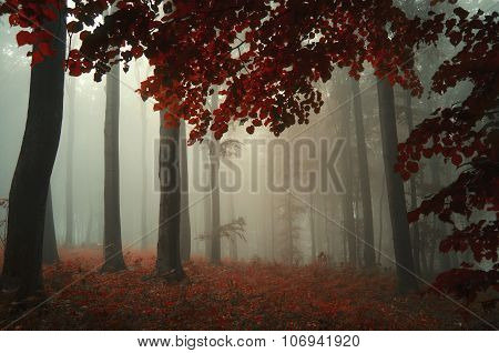 Dark and mysterious forest in autumn