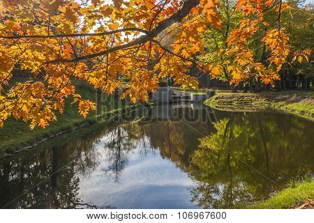 Reflection of Autumn Trees in Water
