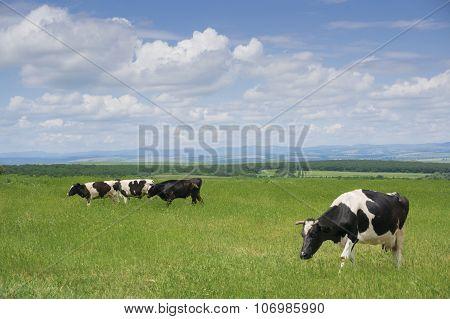 Grazing The Green Grass