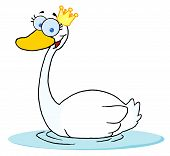 Happy swan with the crown of your head swim in the lake poster