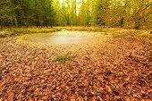 swamp landscape bog forest with standing water. Autumn landscape poster