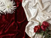 red and white velvet wrinkles background with desiccated red roses and white chrysanthemum poster