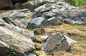 Rabbit in the nature is sitting between stones on the grass poster