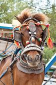 Traditional transport horse in Gili island indonesia poster
