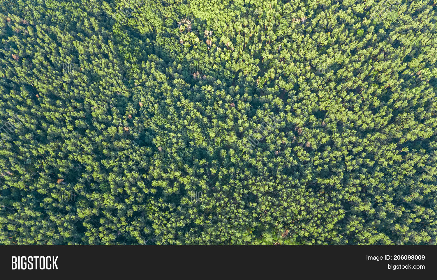 Aerial Top View Of Forest Landscape From Above Pine Trees Green Nature Background