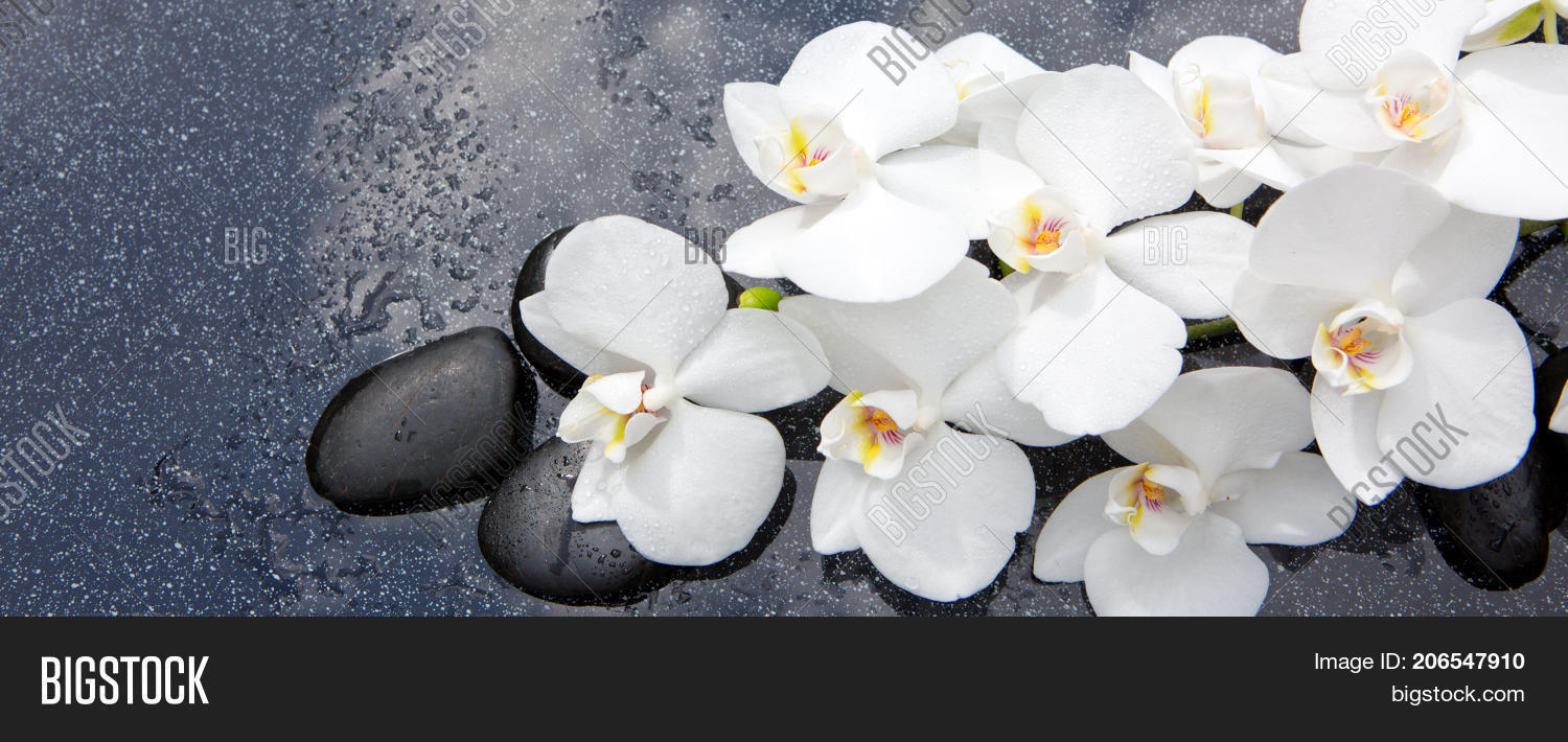 White Orchid Flowers Image Photo Free Trial Bigstock