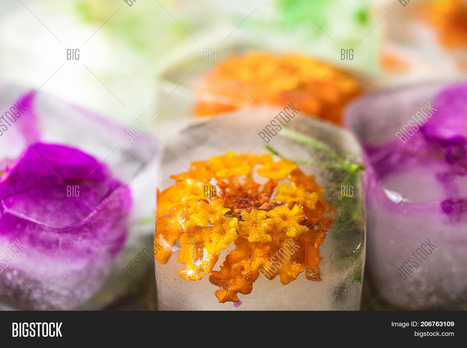 Homemade Ice Cubes Image Photo Free Trial Bigstock