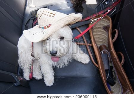 White terrier with summer vacation strawhat on black leather seats inside car.