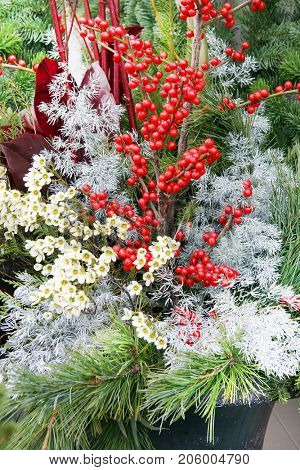 Beautiful Christmas floral arrangement in an outdoor planter with Holly berries and evergreen pine branches.